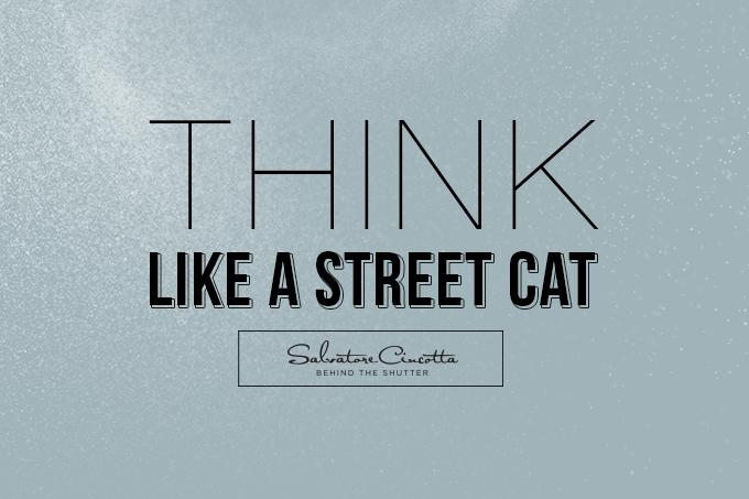 BTS_BlogHeader_StreetCat